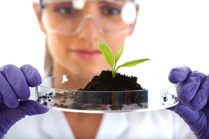 оптическое низкоинтенсивное облучение семян
